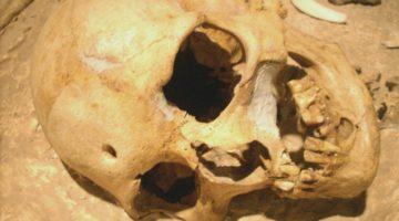 crani forat